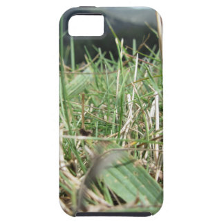 Inside, the lush green grass sprouts everywhere iPhone 5 cover