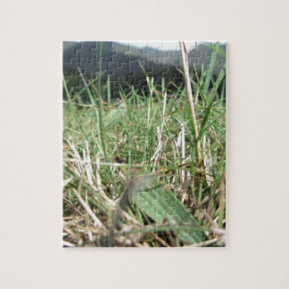 Inside, the lush green grass sprouts everywhere jigsaw puzzle