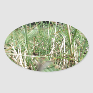 Inside, the lush green grass sprouts everywhere oval sticker