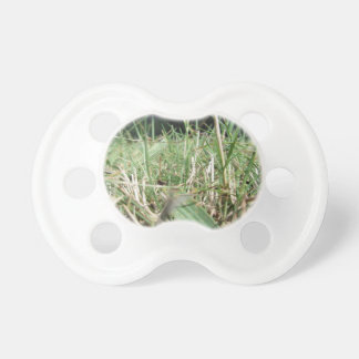 Inside, the lush green grass sprouts everywhere pacifier