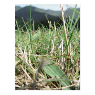 Inside, the lush green grass sprouts everywhere postcard