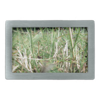 Inside, the lush green grass sprouts everywhere rectangular belt buckle