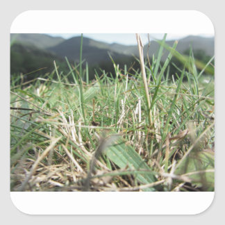 Inside, the lush green grass sprouts everywhere square sticker