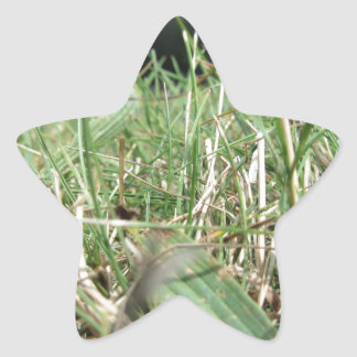 Inside, the lush green grass sprouts everywhere star sticker