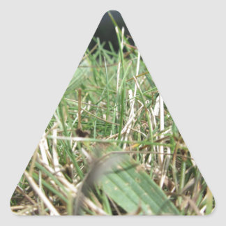 Inside, the lush green grass sprouts everywhere triangle sticker