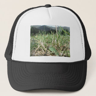 Inside, the lush green grass sprouts everywhere trucker hat