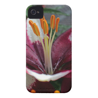 Insignia of Summer iPhone 4 Cover