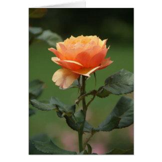 inspirational peach rose notecard