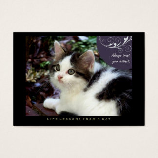 Instinct Life Lessons From a Cat ACEO Art Cards