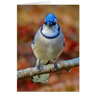 Intense Blue Jay - Bird - Vertical Card