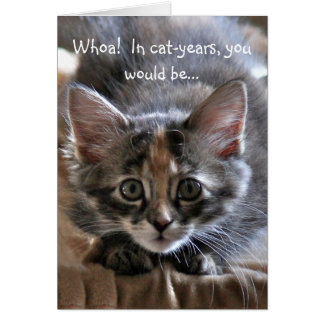 Intense Kitten Happy Birthday Card