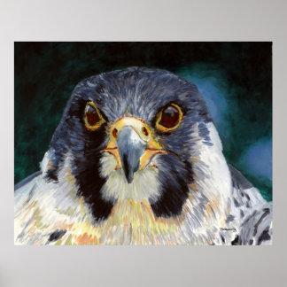 Intensity - The Falcon's Gaze Poster
