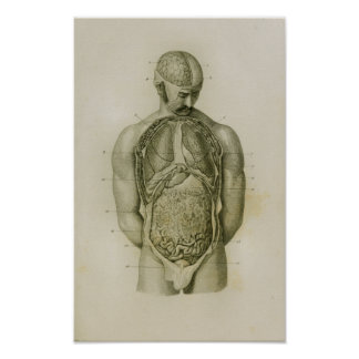 Internal Organs Lungs Brain Vintage Anatomy Print