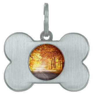 INTERSECTION OF LIGHT AND COLOUR PET TAG
