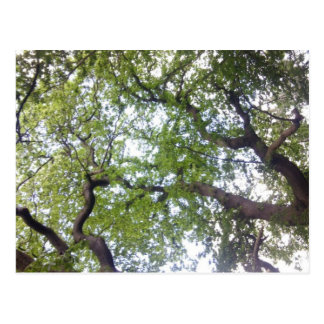 Into the Tree Canopy Photo Postcard