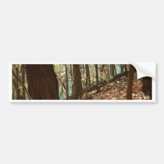 Into the Woods Bumper Sticker