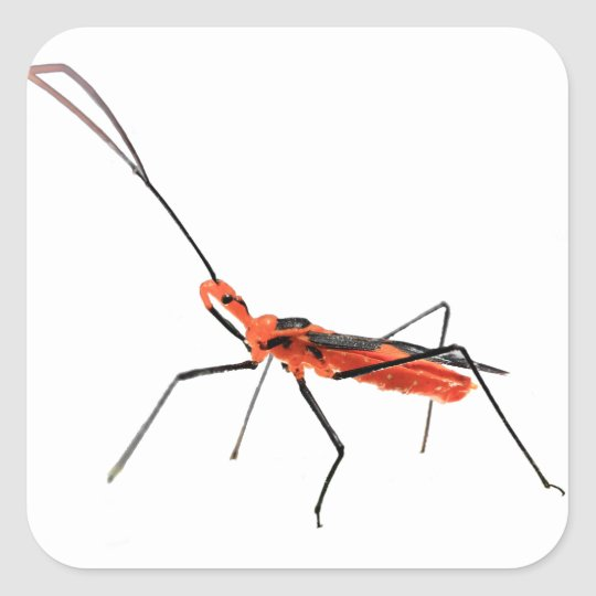 Intricate Assassin Bug Sticker