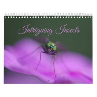 Intriguing Insects Calendar