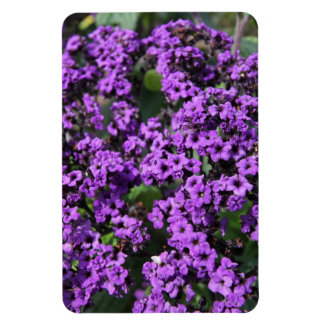 Intriguing Purple Flowers Magnet