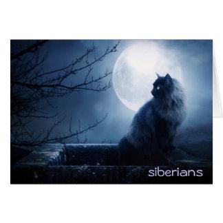 Intriguing Siberian Cat at Nighttime Card