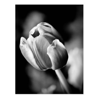 Intriguing tulip photo makes an emotional card