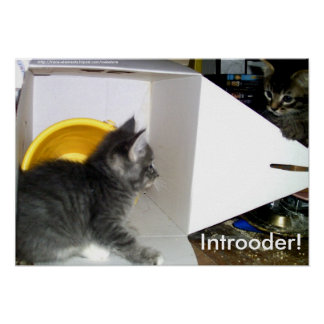 Introoder! Kitten poster