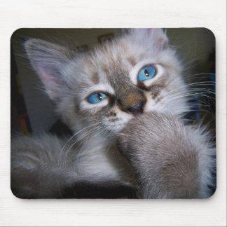 Introspective Thinker Blue-Eyed Kitten Mousepad