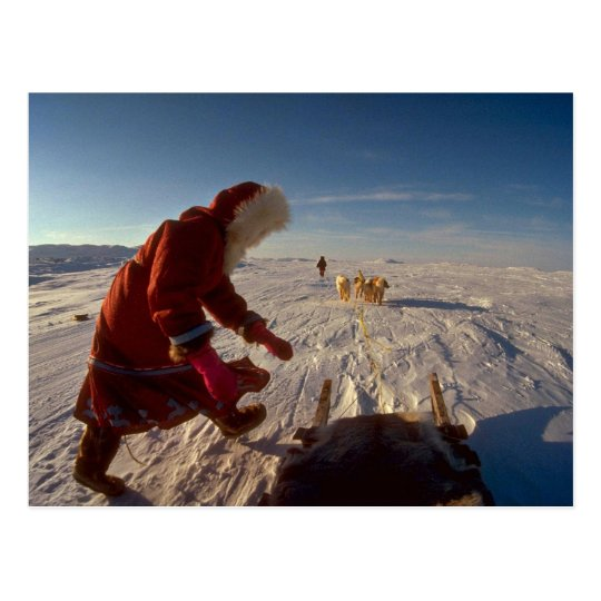 Inuk girl with dog team, Pelly Bay Postcard