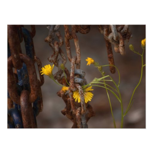 Invasive Flower Photo
