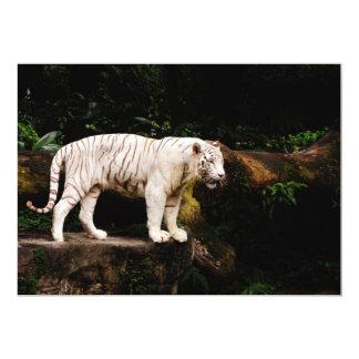 Invitation blanche de tigre