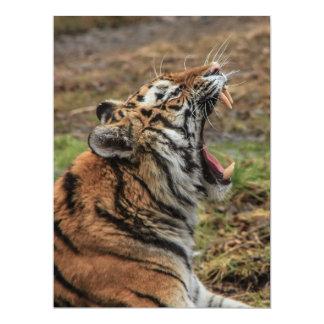 Invitation de baîllement de tigre