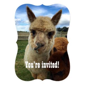 Invitation mignonne de partie d'alpaga