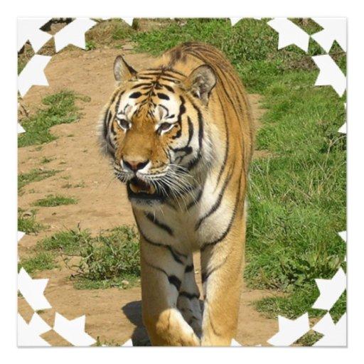 Invitations de vagabondage de tigre