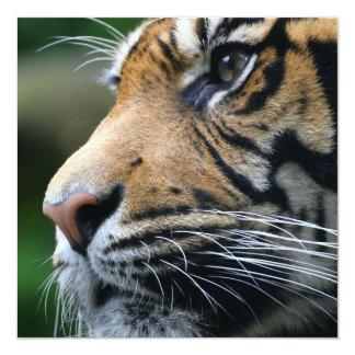 Invitations d'image de tigre