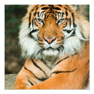 Invitations oranges de tigre