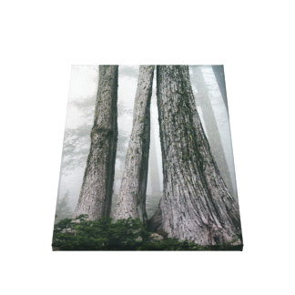 Invoking the Forest Canvas Print
