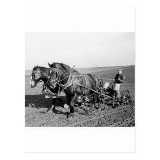 Iowa Corn Planter, 1940s Postcard