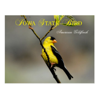 Iowa State Bird - American Goldfinch Postcard