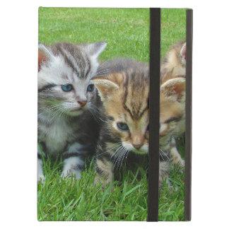 IPad cases cats