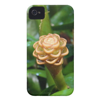 iPhone 4 Case - Beehive Ginger