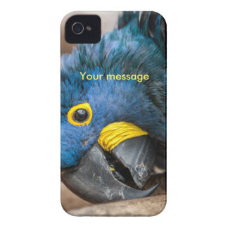 iphone 4 case blue Hyacinth Macaw parrot