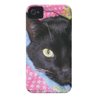 iPhone 4 Case: Funny Cat wrapped in Blankets iPhone 4 Covers