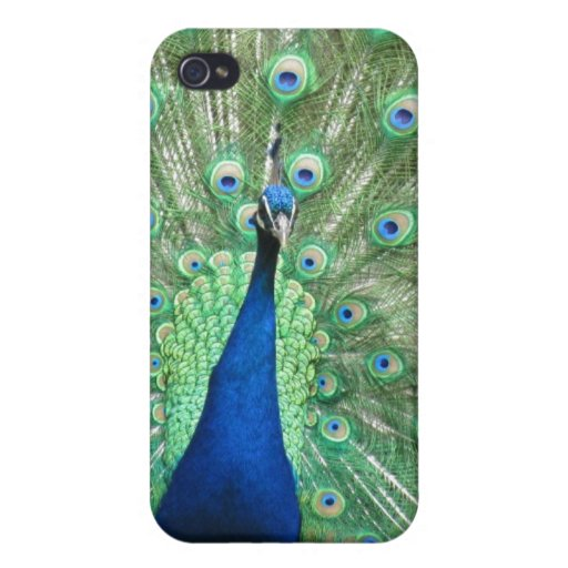 iPhone 4 Savvy - Peacock iPhone 4 Covers