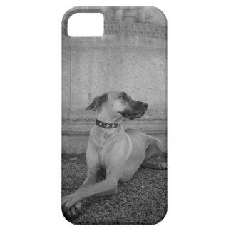 iPhone 5/5s Case with Rhodesian Ridgeback