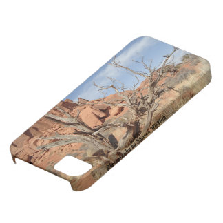 Iphone 5 case driftwood