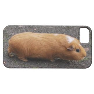 iPhone 5 case with brown and white guinea pig
