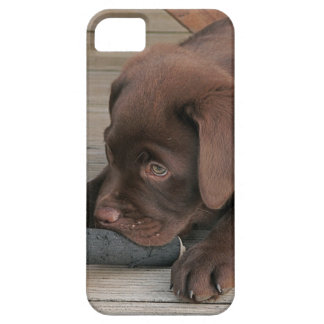 Iphone 5 case with chocolate Labrador retriever