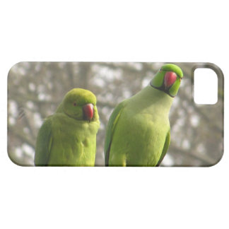 iPhone 5 case with curious parakeets