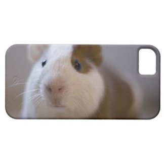 iPhone 5 case with guinea pig face