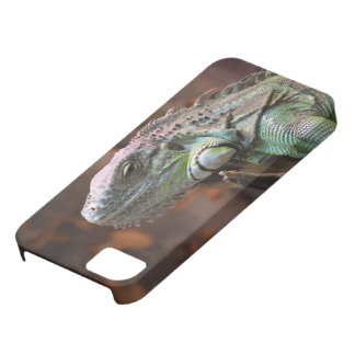 IPhone 5 Case with Iguana lizard